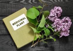 Les plantes anti-inflammatoires veillent sur votre santé